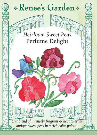 sweet-pea-heirloom-perfume-delight-renees-garden