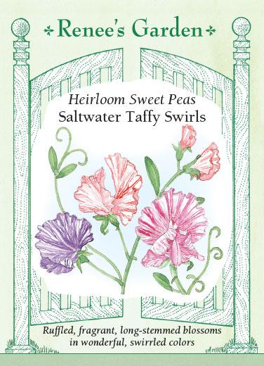 sweet-pea-heirloom-saltwater-taffy-swirls-renees-garden