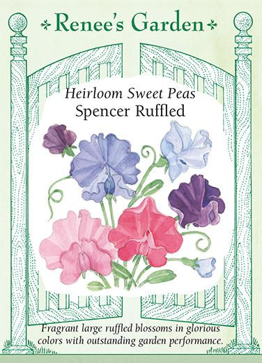sweet-pea-heirloom-spencer-ruffled-renees-garden