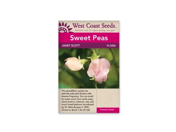 sweet-peas-janet-scott-west-coast-seeds