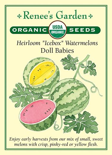 watermelon-heirloom-icebox-watermelons-doll-babies-organic-renees-garden