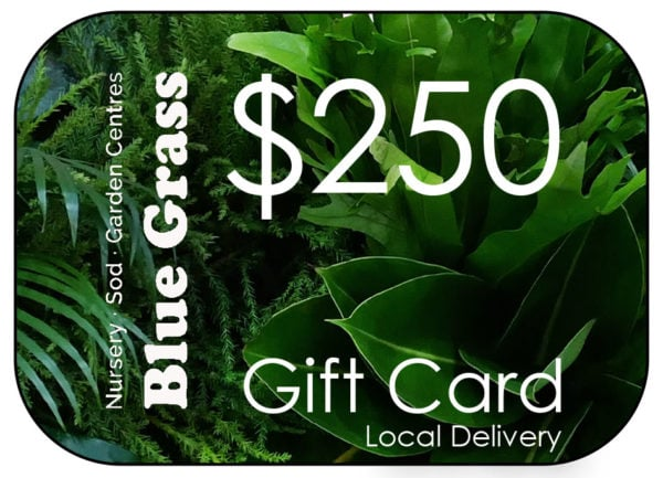 blue-grass-gift-card-250-delivery