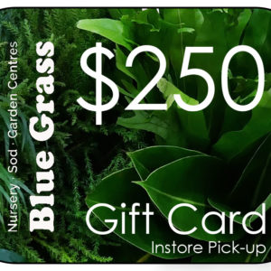 blue-grass-gift-card-250-instore