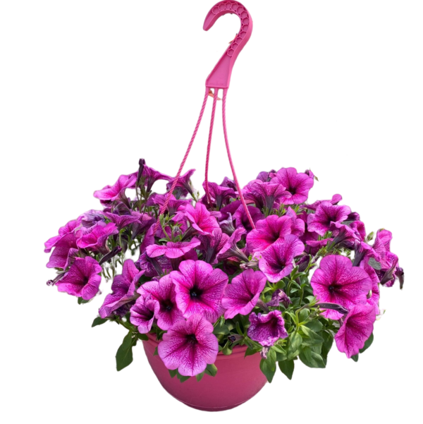 hanging-basket-easy-wave-petunia-10-inch-pink