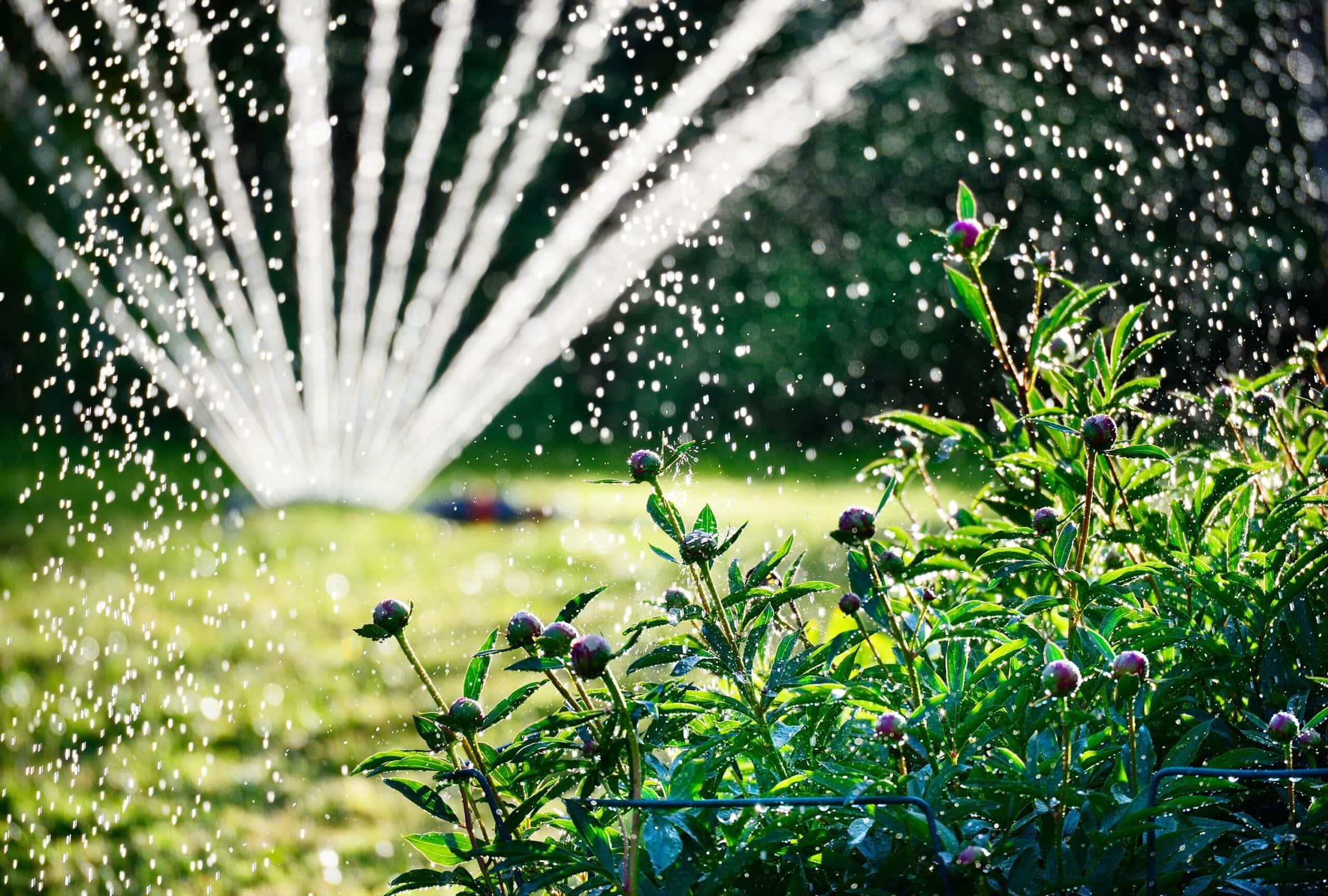 sprinkler in a garden shutterstock_141674512