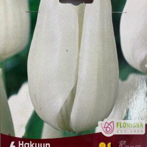 fall-bulbs-tulips-darwin-hybrid-hakuun