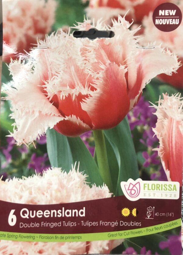 fall-bulbs-tulips-double-fringed-queensland