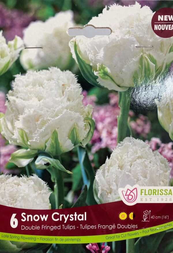 fall-bulbs-tulips-double-fringed-snow-crystal