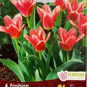 fall-bulbs-tulips-kaufmanniana-fashion
