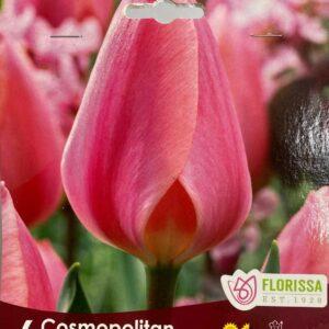 fall-bulbs-tulips-single-early-cosmopolitan