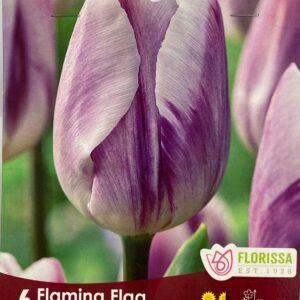 fall-bulbs-tulips-triumph-flaming-flag